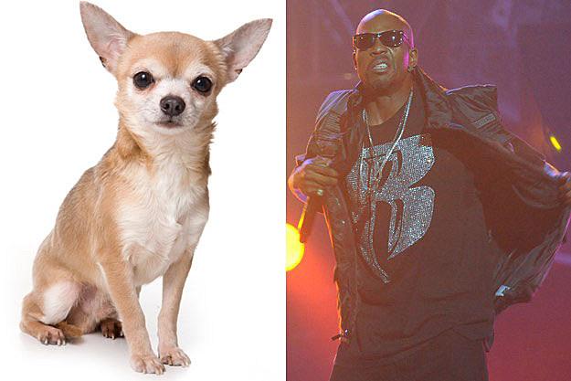 Dog DMX