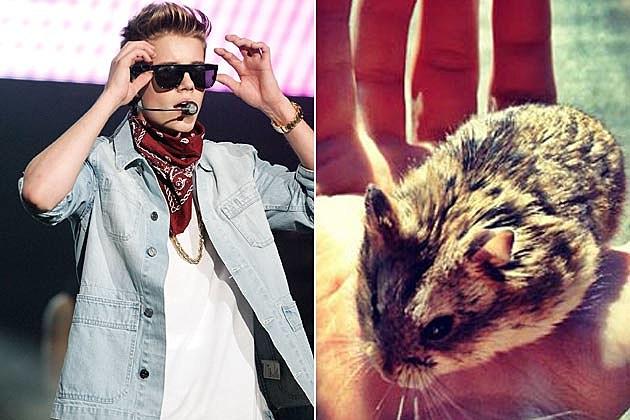 Bieber Pac