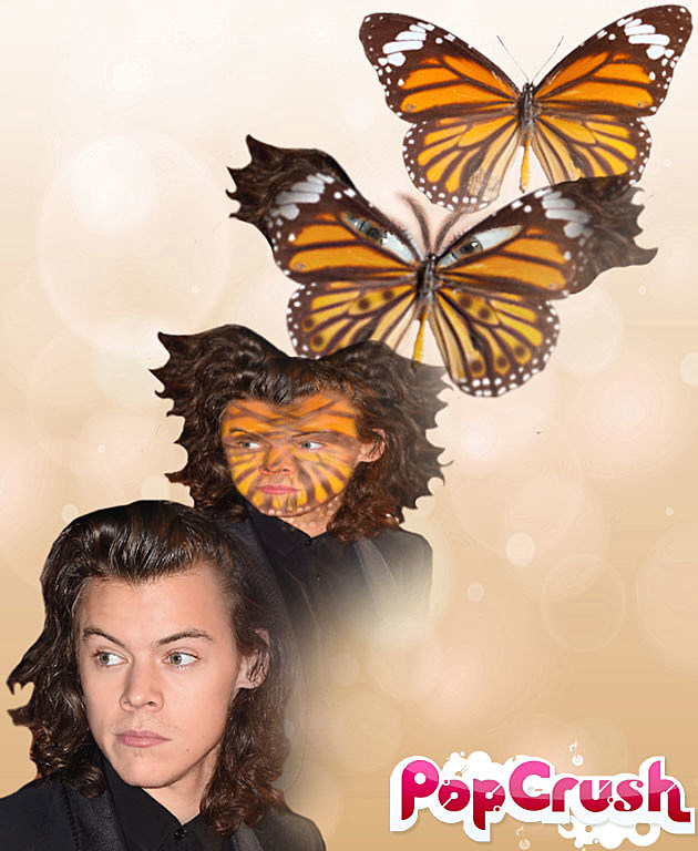 Harry Styles Butterfly Drawing Harry Styles