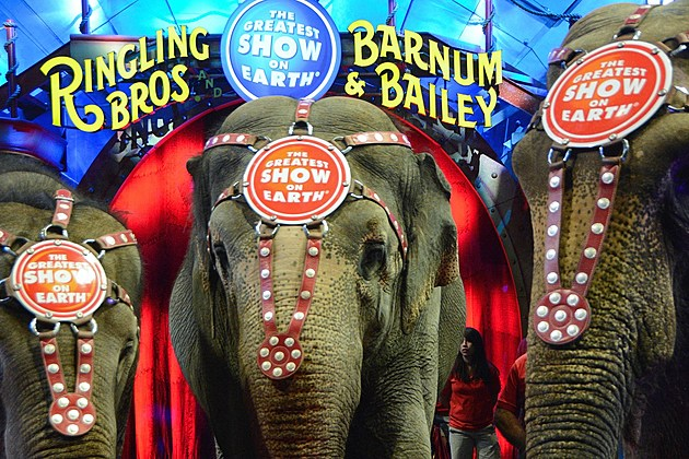 """Ringling Bros. And Barnum & Bailey Presents """"Circus XTREME"""" VIP Celebrity Red Carpet Premiere"""